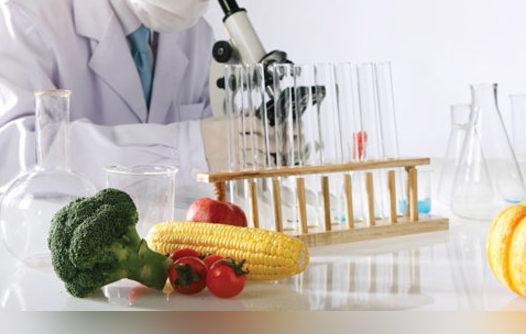 Influência de processamentos tecnológicos no metabolismo e bioatividade de compostos fenólicos de alimentos